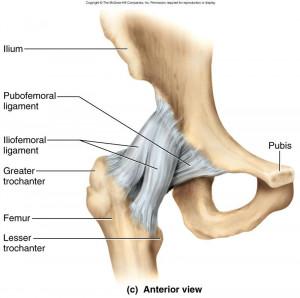 Articulation de hanche
