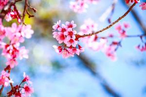 Le-printemps-est-la