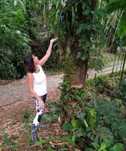 Sylvie Brésil~1